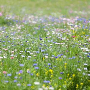 Native Flower Mixes
