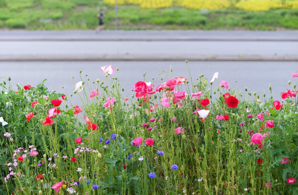 Border of wildflowers city roadside