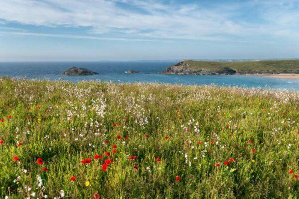 Coastal Meadow Mix