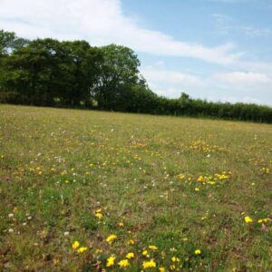 General Purpose Meadow Mix