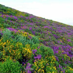 Acidic Soils Meadow Mix